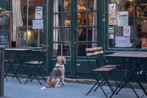 Restauracje przyjazne psom